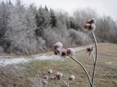 zima v Polánce